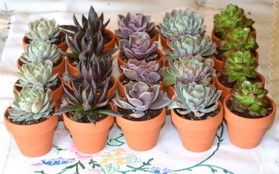 succulent wedding favour